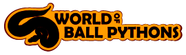 Go to World of Ball pythons website